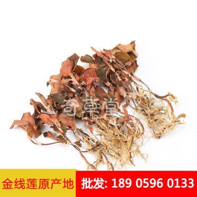 福建野生金线莲 的品质 金线莲的产地自采 营养价值高