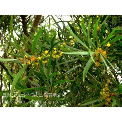 灌木种子护坡优势自贡绿化固土植物草籽经销商