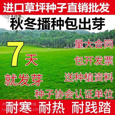 批发草坪种子护坡草籽绿化四季青狗牙根黑麦草皮耐践踏免修剪庭院