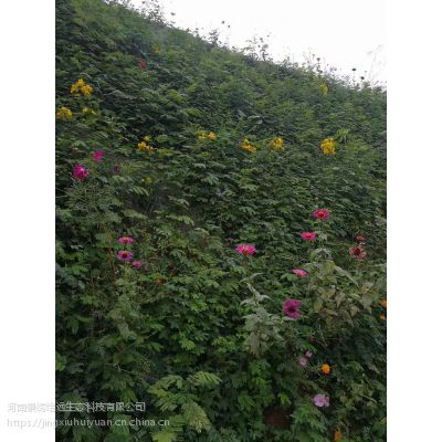 边坡绿化客土 混凝土边坡绿化 客土喷播养护河南景绣