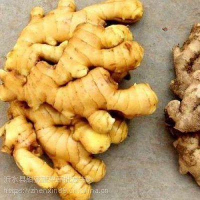 生姜基地出售价格 大黄姜今年产量如何