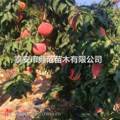 桃树苗批发 桃树苗批发市场在哪里