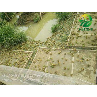 青蛙养殖加盟要注意的问题有哪些呢