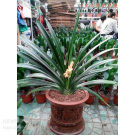北京花卉绿植销售公司北京怡霖园林
