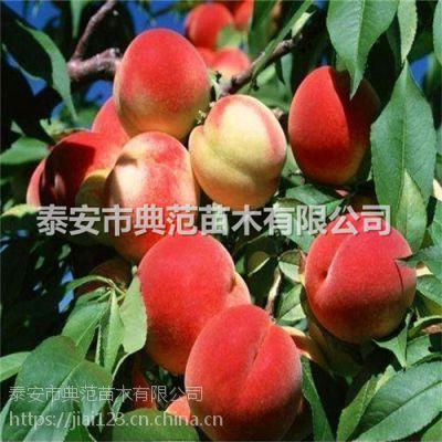 春雪桃树苗多少钱一棵 山东桃树苗基地批发