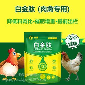 土鸡催肥用什么 土鸡催肥药 白金肽效果怎么样