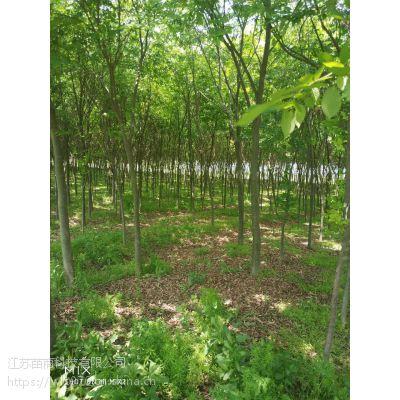 《七叶树一年生10-20公分4万株 安徽七叶树批发市场》收购价