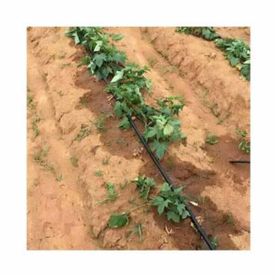 种草莓用滴灌还是喷灌好