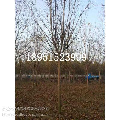 【白蜡树价格白蜡树报价白蜡树多少钱一棵】5公分6公分7公分8公分10公分12公分