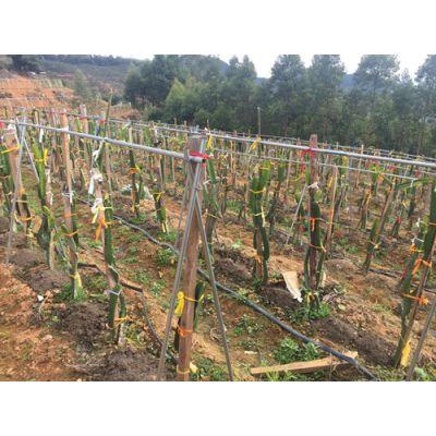 农业专家概念:南充白酒专用气相色谱仪