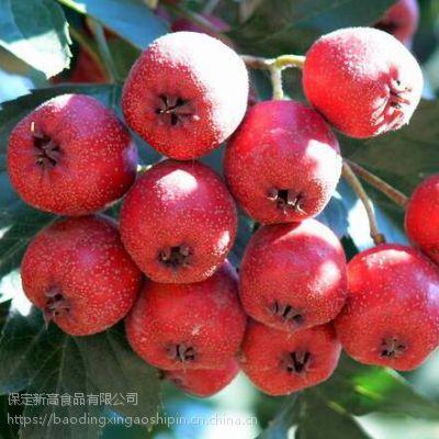 铁山楂 山里红种植户 红果原料 优质铁山楂原料产地 新高食品