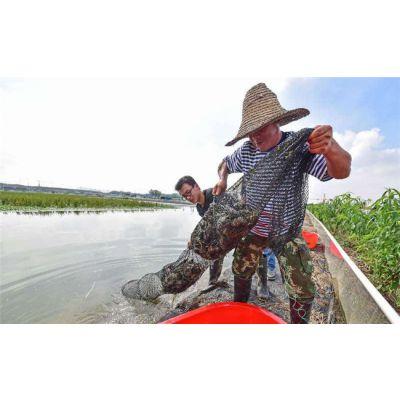 澳洲淡水龙虾养殖澳洲淡水小龙虾养殖视频无锡龙澳生态农业发展有限公司