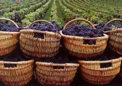 葡萄酒和干红哪个好-澳门葡萄酒-加诺葡萄酒(查看)