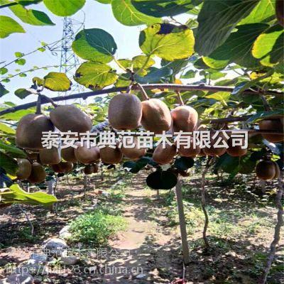 华优猕猴桃苗多少钱一棵 华优猕猴桃苗品种介绍