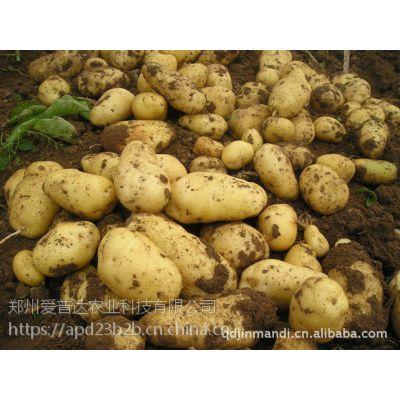 土豆旺长怎么办昆仑风土豆控旺膨大专用叶面肥套餐