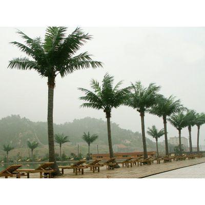 仿真植物厂家定制人造椰子树热带景观椰子树海上乐园搭配装饰树