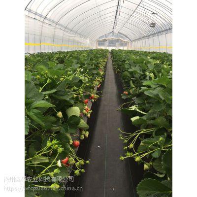 简易薄膜拱棚采摘园 建一个草莓采摘园用哪种材料的大棚好