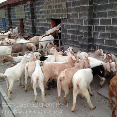 一个客户的育肥羊喂料配方,效果为什么这么好