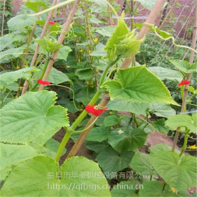 菜农乐呵呵操作的菜园种植绑枝机