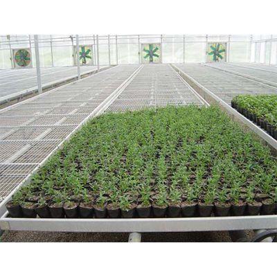 宜良蔬菜移动苗床-宏阳温室大棚-宜良蔬菜移动苗床多少钱