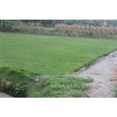 景赐园林草皮基地自产自销 混播草坪 台湾二号 质量过硬 量大从优