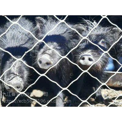 山东淄博市藏香猪卖什么价格