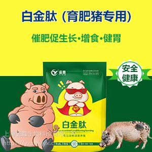 猪吃什么长得快 养猪催肥用什么 白金肽效果怎么样