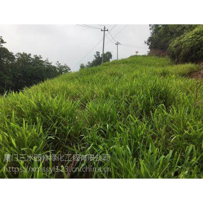 出售自贡公路复绿灌木苗木种子常用品种供应