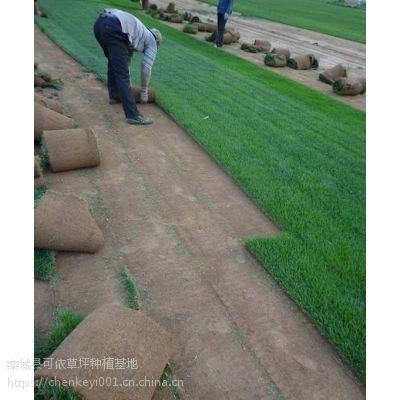 辛集出售草皮卷|买草坪草籽|批发草坪
