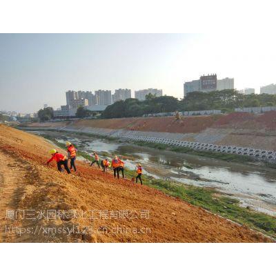 自贡河床水坝护堤选用什么灌木猪屎豆种子绿化