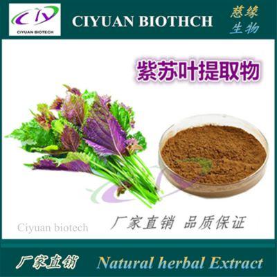 紫苏提取物10:1 紫苏叶提取物 慈缘生物 质优价廉 品质保证