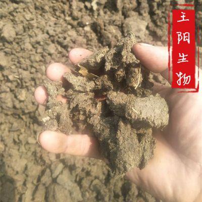 河北哪里有卖牛粪干石家庄【王阳有机肥厂】河北干牛粪厂家 石家庄发酵有机肥价格
