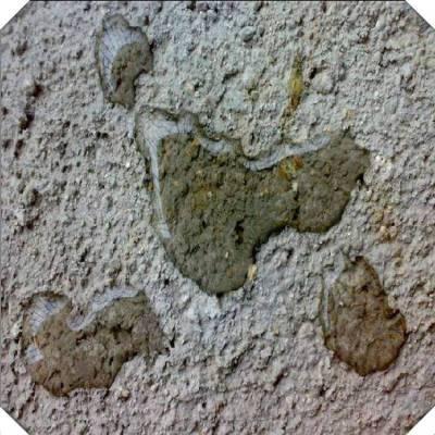 双组分 聚合物水泥防水砂浆 吉林九台市厂家