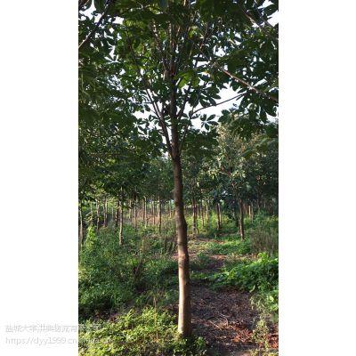 【江苏七叶树批发市场】采购价 江苏七叶树品种多/成活率高