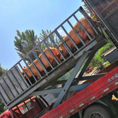屠宰场用固定式装卸猪台 2吨剪叉式电动液压举升机制造厂