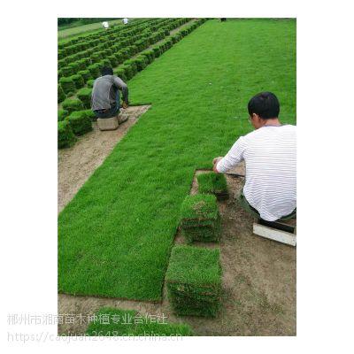 郴州真草坪价格/一首货源/农户直销