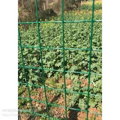 绿色方格铁丝网 荷兰网厂家报价和网丝有关系 散养鸡围栏隔离网