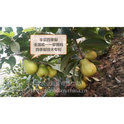 丰实四季采摘水果丰实四季梨