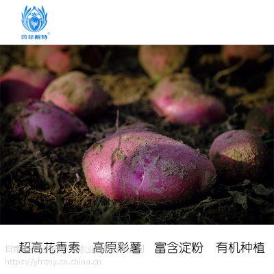 马铃薯出售(自产约2000吨陇薯)2019年预定中