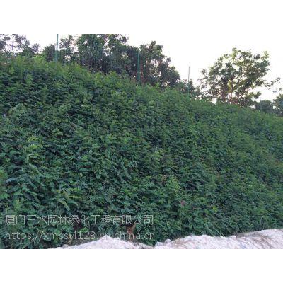 木豆种子在自贡地区可以用在高速公路边坡绿化吗