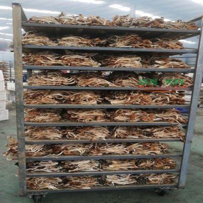 行业人士的茶树菇烘干设备食用菌烘干经验汇总
