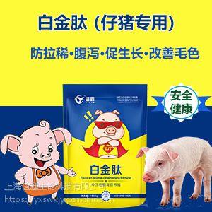 如何养猪长得快 猪催肥饲料添加剂 猪吃什么长得快 白金肽