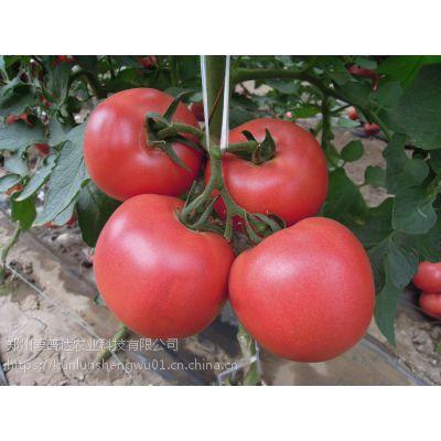 番茄生根膨果专用高钾高钙冲施肥