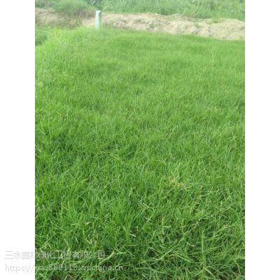 遵义速生速成坪草籽草种