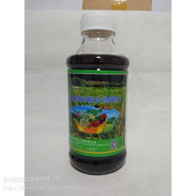 生物菌益加益植物调节营养液em菌灌根浸种促生长