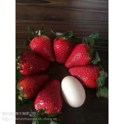 妙香七号草莓苗2019新报价 妙香七号种苗多少钱一棵