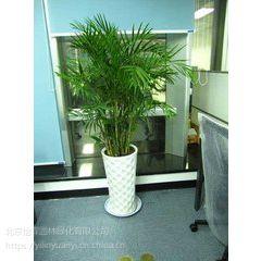北京绿植出租公司北京绿植租赁公司