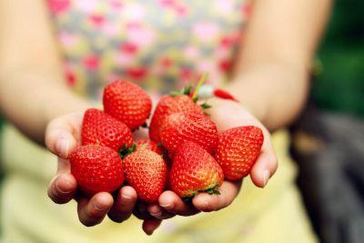 如何种植草莓苗?