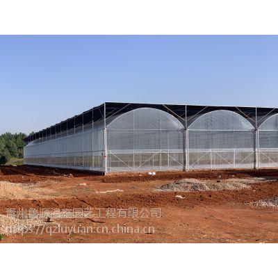 江苏连云港塑料樱桃大棚温室6米檐高、建筑面积3万平圆拱连体型定制厂家