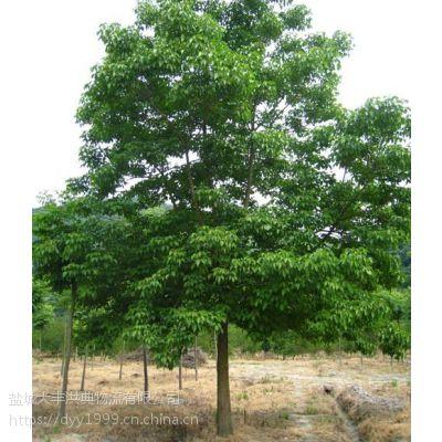 今日15公分重阳木价格 浙江重阳木现在是什么价?